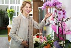Frau, die eingemachte Phalaenopsisblume auswählt Stockfoto