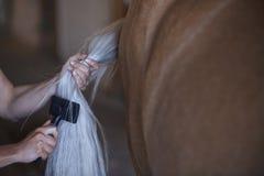 Frau, die Endstück des Pferds kämmt lizenzfreie stockfotografie