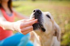 Frau, die Festlichkeitslabrador-Hund gibt Stockfoto