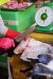 Frau, die Fische in Saigon vorbereitet Stockbild