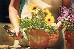 Frau, die Gartenarbeit erledigt stockfotos
