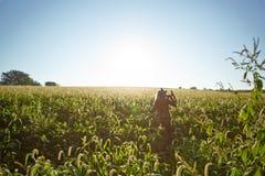 Frau, die glücklich durch Feld des Grases schlendert Lizenzfreie Stockfotos