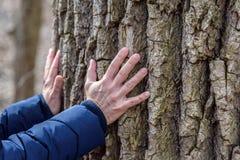 Frau, die Hände auf Barke des großen alten Baums setzt lizenzfreie stockfotos