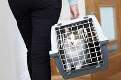 Frau, die Haustier Cat To Vet In Carrier nimmt lizenzfreies stockfoto