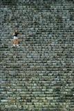 Frau, die hinunter Pyramide von Cichen Itza, Mexiko erhält Stockfotografie
