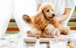 Frau, die Hund mit einer Bürste verkratzt Stockbild