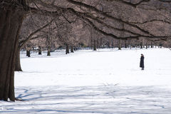 Frau, die ihr Mobiltelefon im Central Park bedeckt mit Schnee nach Wintersturm Stella überprüft Lizenzfreie Stockfotografie