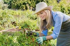 Frau, die im Garten arbeitet lizenzfreie stockfotografie