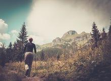 Frau, die im Gebirgswald wandert Stockbild