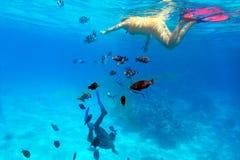 Frau, die im Roten Meer schnorchelt Stockfotografie
