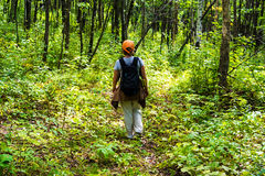 Frau, die im Wald wandert lizenzfreie stockbilder