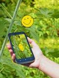Frau, die intelligentes Mobiltelefon im Park verwendet Technologie und Witze Stockbilder