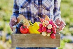 Frau, die Kiste mit Gemüse auf Bauernhof hält stockfotos