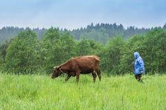 Frau, die Kuh nimmt Stockfotografie