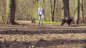 Frau, die mit bernese Schäferhundewelpen geht stock footage