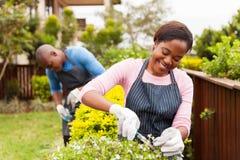 Frau, die mit Ehemann im Garten arbeitet stockfotografie