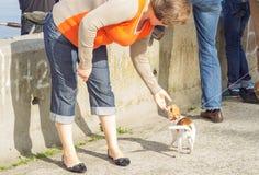 Frau, die mit Hund spielt Stockfoto