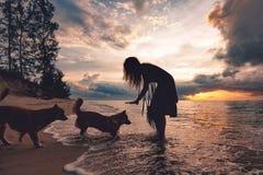 Frau, die mit Hunden auf dem Strand bei Sonnenuntergang spielt Lizenzfreie Stockfotos