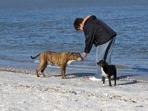 Frau, die mit Hunden auf dem Strand spielt Stockfoto