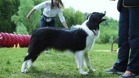 Frau, die mit ihrem border collie-Hund, den Frisbee werfend spielt stock footage