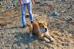 Frau, die mit ihrem Hund auf dem Strand spielt Lizenzfreies Stockbild