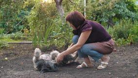Frau, die mit ihrem Hund spielt stock video