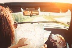 Frau, die mit ihrem reizenden Spürhundhund durch konvertierbares Auto reisen und Planungsroute unter Verwendung der Papierkarte a lizenzfreie stockbilder