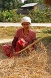 Frau, die in Nepal drischt Stockbilder