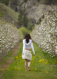 Frau, die in Obstgarten geht stockbild