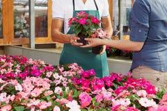 Frau, die rosafarbene Blumen kauft Stockbilder