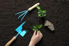 Frau, die Sämling in den nahen Gartenarbeitwerkzeugen des Bodens pflanzt stockbilder