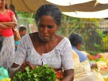 Frau, die Salat - Tangalla (Sri Lanka sortiert, Asien) Lizenzfreie Stockfotos