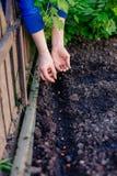 Frau, die Samen im Garten pflanzt Stockfotos