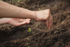Frau, die Samen im Garten pflanzt Lizenzfreie Stockfotografie