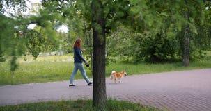 Frau, die schönen Hund im grünen Park geht und draußen Smartphone verwendet stock video footage