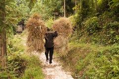 Frau, die schwere Lasten des Reisstrohs trägt Stockfotografie