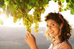 Frau, die Trauben unter Sonnenunterganglicht erntet lizenzfreies stockbild