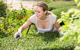 Frau, die um Büschen im Garten sich kümmert Stockbilder
