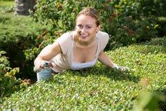 Frau, die um Büschen im Garten sich kümmert Stockfoto