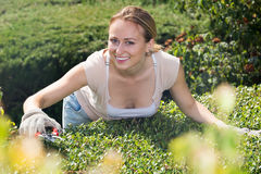 Frau, die um Büschen im Garten sich kümmert Lizenzfreies Stockbild