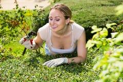 Frau, die um Büschen im Garten sich kümmert Stockfotografie