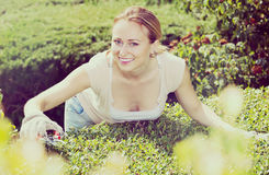 Frau, die um Büschen im Garten sich kümmert Stockfotos