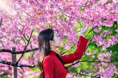 Frau, die Vietnam-Kultur traditionell im Kirschblütenpark trägt stockfoto
