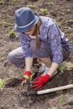 Frau, die wegetables pflanzt Lizenzfreie Stockfotografie