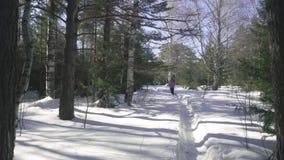 Frau, die in Winterwald geht stock video