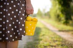Frau in einem Braun punktierte das Kleid, das einen gelben Eimer voll von den organischen Zitronen hält Zitrusfruchternte im Gart lizenzfreie stockfotos