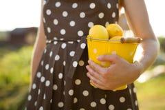 Frau in einem Braun punktierte das Kleid, das einen gelben Eimer voll von den organischen Zitronen hält Zitrusfruchternte im Gart stockfotos