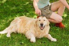 Frau geht einen Hund lizenzfreie stockfotografie