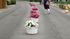 Frau geht entlang die Gasse unter Blumen auf dem Bürgersteig stock video