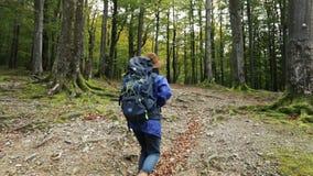 Frau geht, im Wald zu wandern stock video